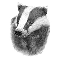 596: Becoming a Badger